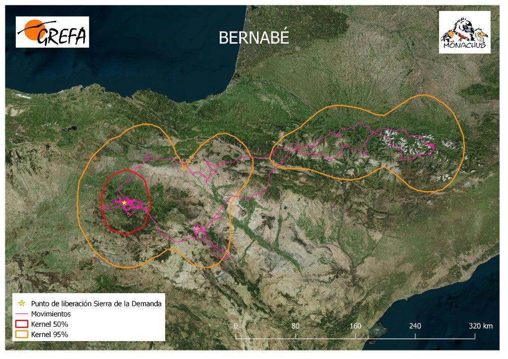 Mapa 10. Movimientos de Bernabé durante el mes de junio. La línea amarilla delimita el área de campeo (Kernel 95%) y la roja el área vital (Kernel 50%).