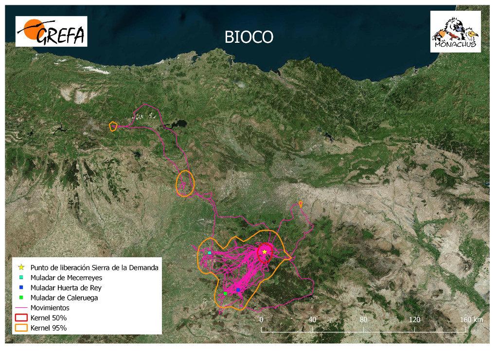 Mapa 11. Movimientos de Bioco durante el mes de junio. La línea amarilla delimita el área de campeo (Kernel 95%) y la roja el área vital (Kernel 50%).