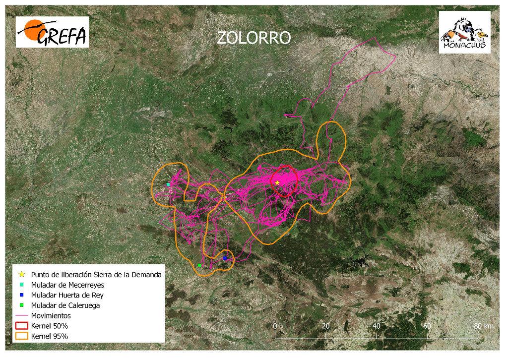 Mapa 13. Movimientos de Zolorro durante el mes de junio. La línea amarilla delimita el área de campeo (Kernel 95%) y la roja el área vital (Kernel 50%).