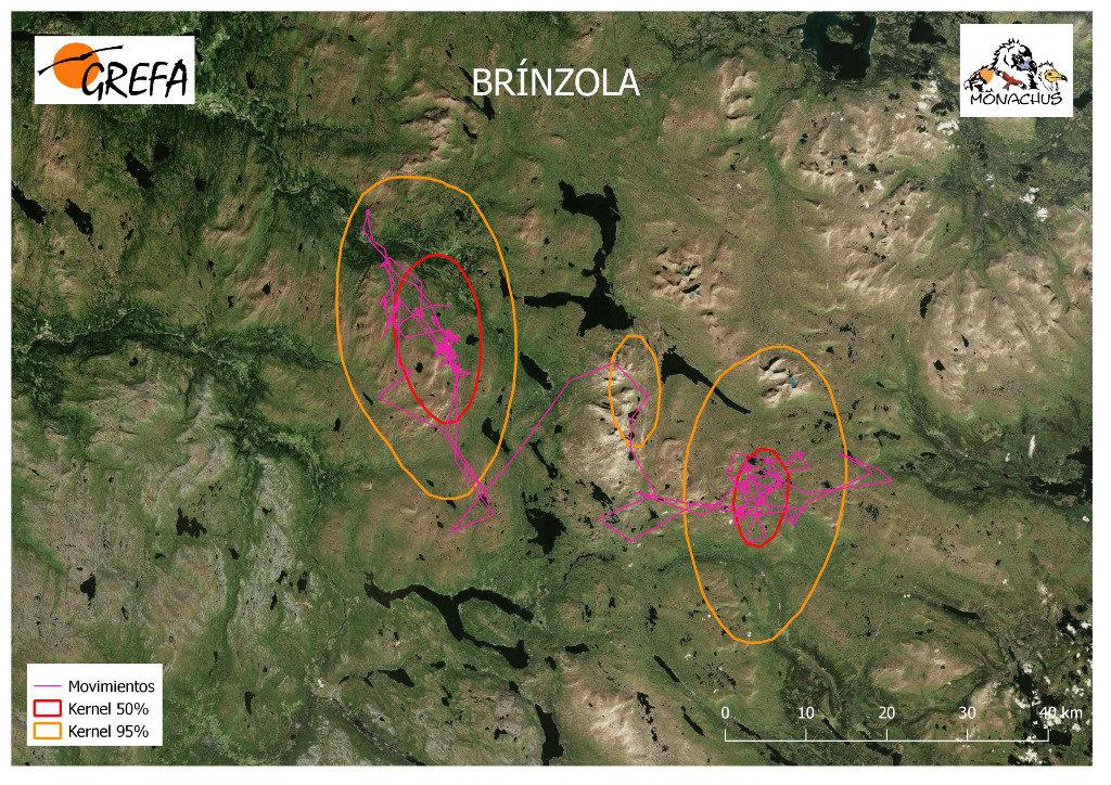 Mapa 14. Movimientos de Brínzola durante el mes de junio. La línea amarilla delimita el área de campeo (Kernel 95%) y la roja el área vital (Kernel 50%).