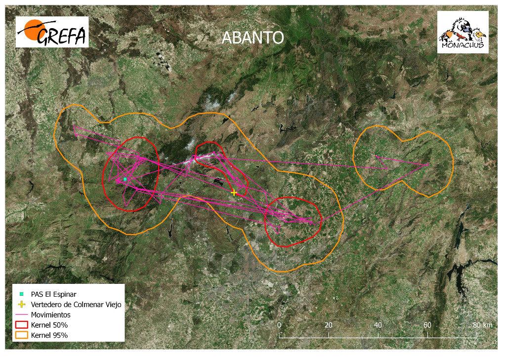 Mapa 15. Movimientos de Abanto durante el mes de junio. La línea amarilla delimita el área de campeo (Kernel 95%) y la roja el área vital (Kernel 50%).