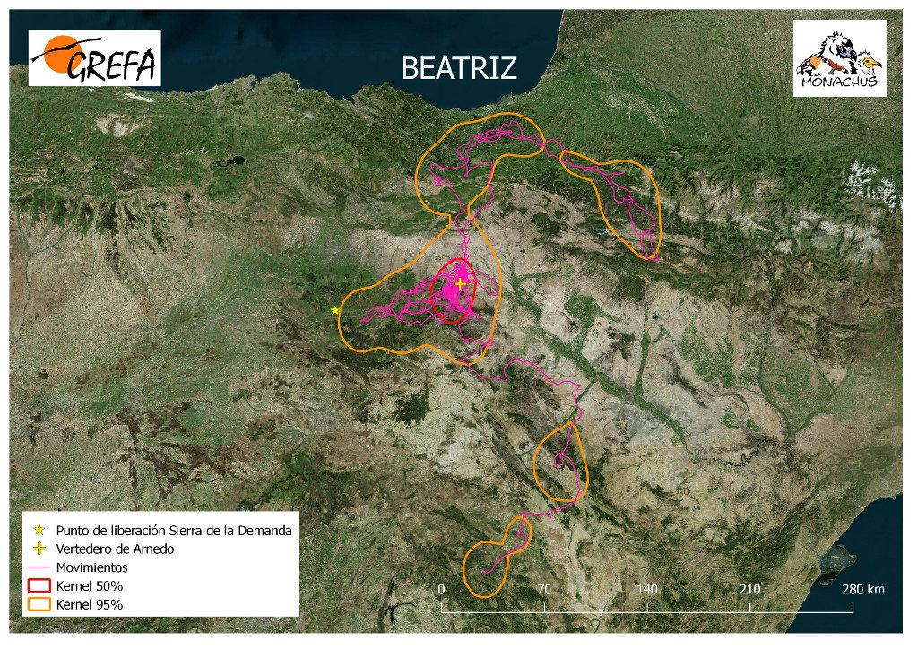 Mapa 17. Movimientos de Beatriz durante el mes de junio. La línea amarilla delimita el área de campeo (Kernel 95%) y la roja el área vital (Kernel 50%).