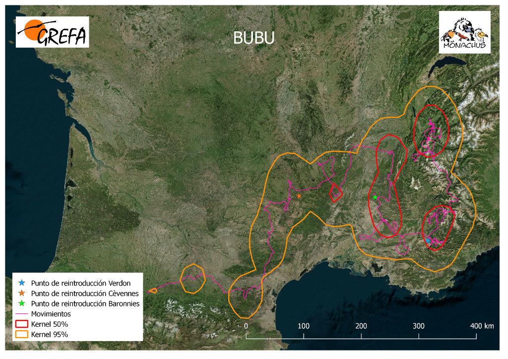 Mapa 18. Movimientos de Bubu durante el mes de junio. La línea amarilla delimita el área de campeo (Kernel 95%) y la roja el área vital (Kernel 50%).