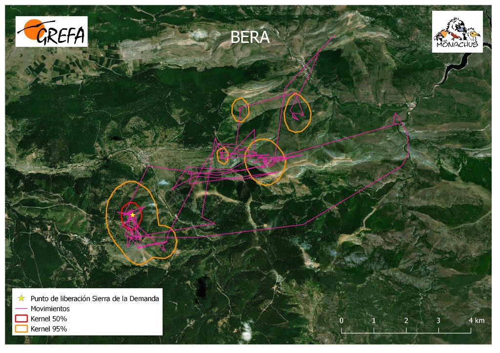 Mapa 1. Movimientos de Bera durante el mes de junio. La línea amarilla delimita el área de campeo (Kernel 95%) y la roja el área vital (Kernel 50%).