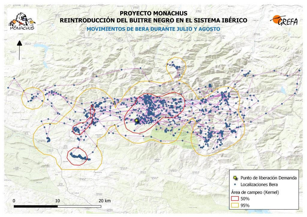 Mapa 1. Movimientos de Bera durante los meses de julio y agosto. La línea amarilla delimita el área de campeo (Kernel 95%) y la roja el área vital (Kernel 50%).