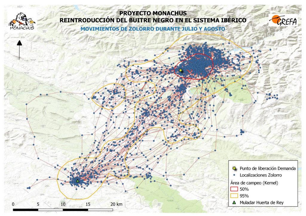 Mapa 3. Movimientos de Zolorro durante el mes de junio. La línea amarilla delimita el área de campeo (Kernel 95%) y la roja el área vital (Kernel 50%).
