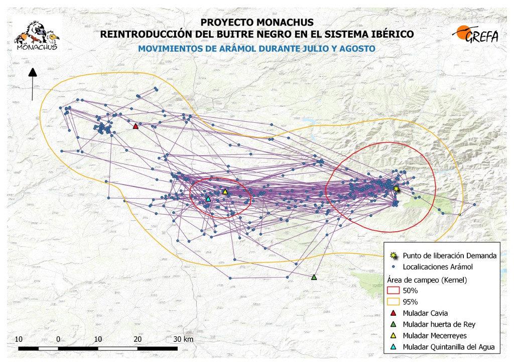 Mapa 6. Movimientos de Arámol durante los meses de julio y agosto. La línea amarilla delimita el área de campeo (Kernel 95%) y la roja el área vital (Kernel 50%).