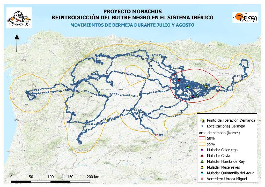 Mapa 9. Movimientos de Bermeja durante los meses de julio y agosto. La línea amarilla delimita el área de campeo (Kernel 95%) y la roja el área vital (Kernel 50%).