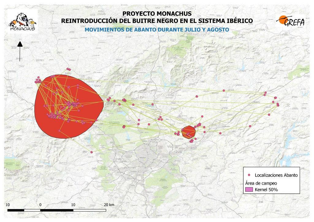 Mapa 14. Movimientos de Abanto durante los meses de julio y agosto. El área roja delimita el área vital (Kernel 50%).