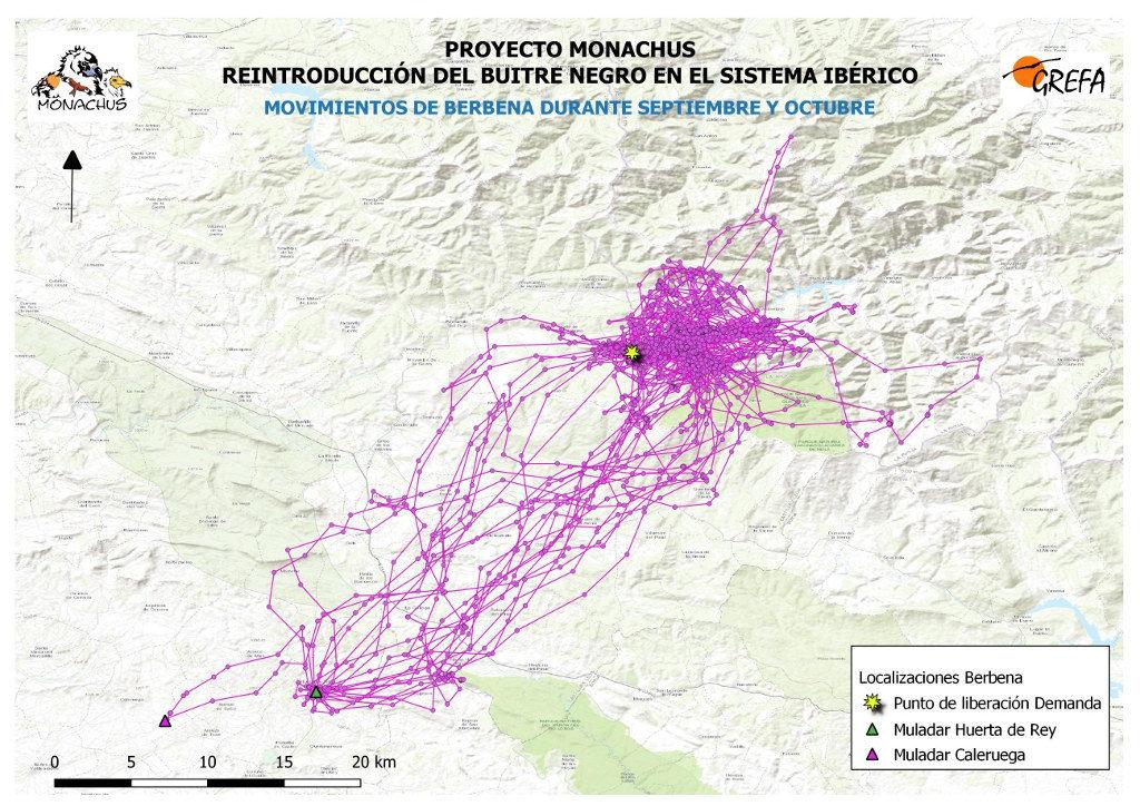 Mapa 4. Movimientos de Berbena durante septiembre y octubre.