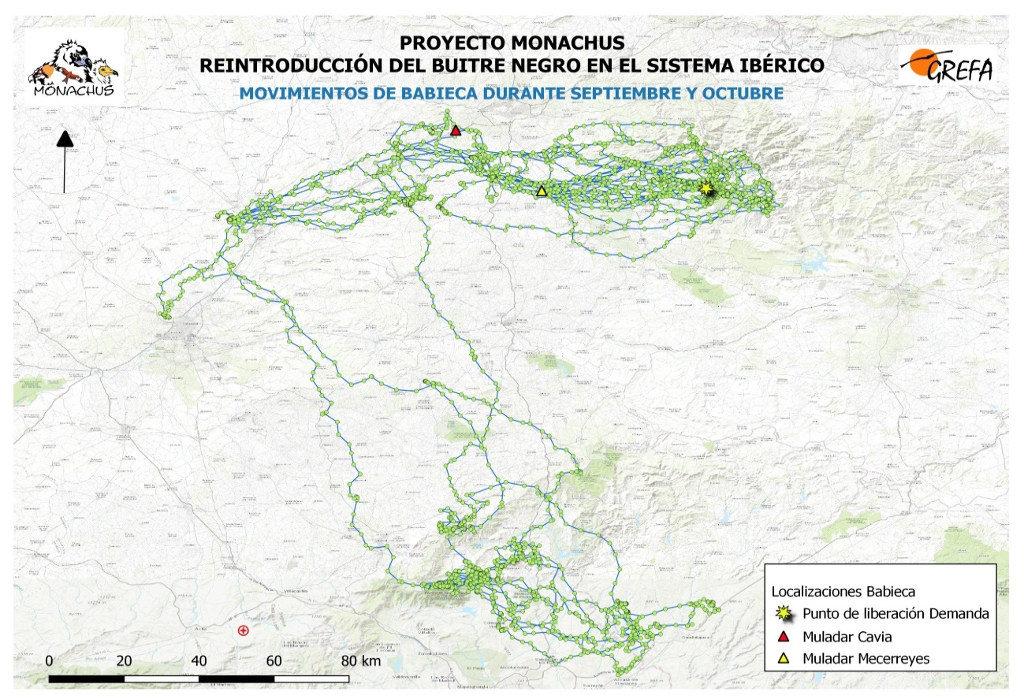 Mapa 11. Movimientos de Babieca durante los meses de septiembre y octubre.