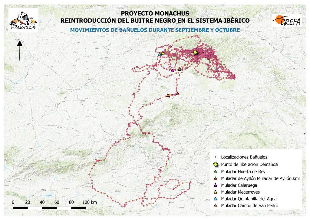 Mapa 12. Movimientos de Bañuelos durante los meses de septiembre y octubre.