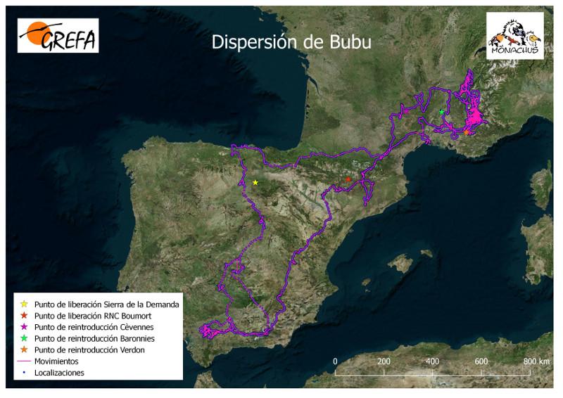 """Dispersión de """"Bubu"""" tras su liberación el 9 de abril de 2019 en los Montes de Toledo."""