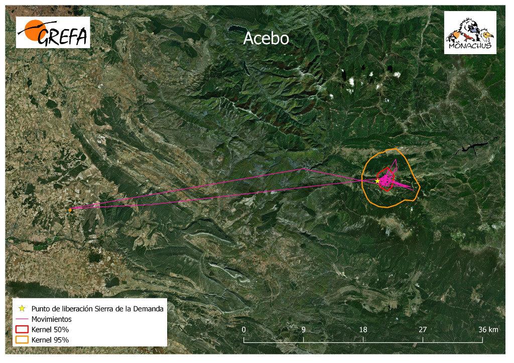 Mapa 1. Movimientos de Acebo durante los meses de noviembre y diciembre. La línea amarilla delimita el área de campeo (Kernel 95%) y la roja el área vital (Kernel 50%).