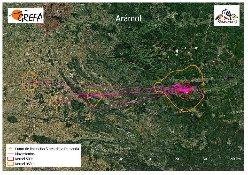 Mapa 2. Movimientos de Arámol durante los meses de noviembre y diciembre. La línea amarilla delimita el área de campeo (Kernel 95%) y la roja el área vital (Kernel 50%).