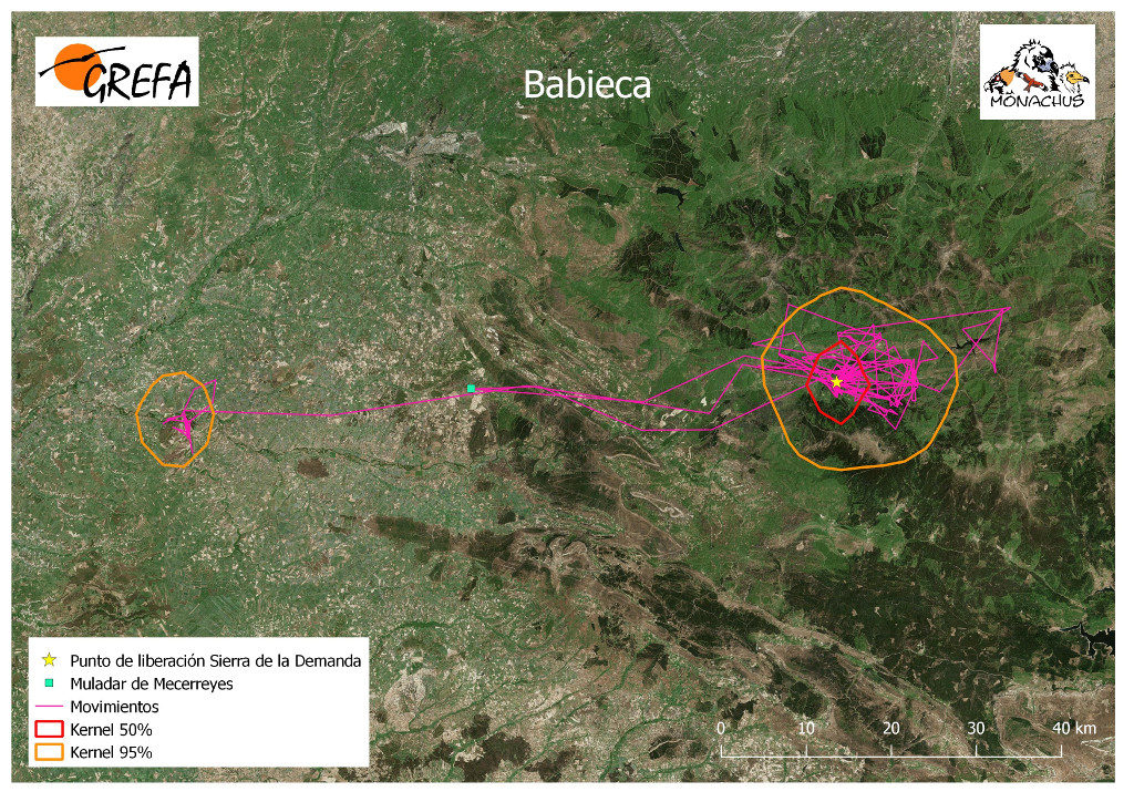 Mapa 3. Movimientos de Babieca durante los meses de noviembre y diciembre. La línea amarilla delimita el área de campeo (Kernel 95%) y la roja el área vital (Kernel 50%).