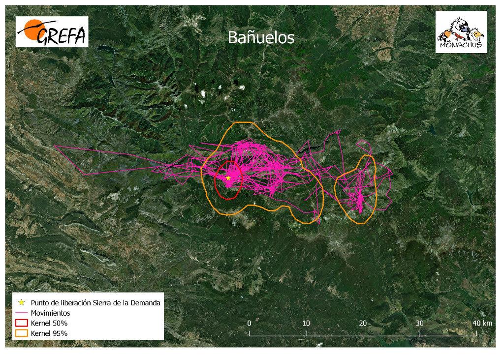 Mapa 4. Movimientos de Bañuelos durante los meses de noviembre y diciembre. La línea amarilla delimita el área de campeo (Kernel 95%) y la roja el área vital (Kernel 50%).