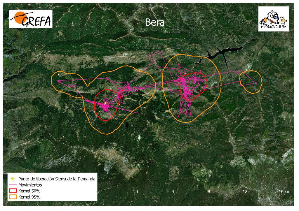 Mapa 6. Movimientos de Bera durante los meses de noviembre y diciembre. La línea amarilla delimita el área de campeo (Kernel 95%) y la roja el área vital (Kernel 50%).