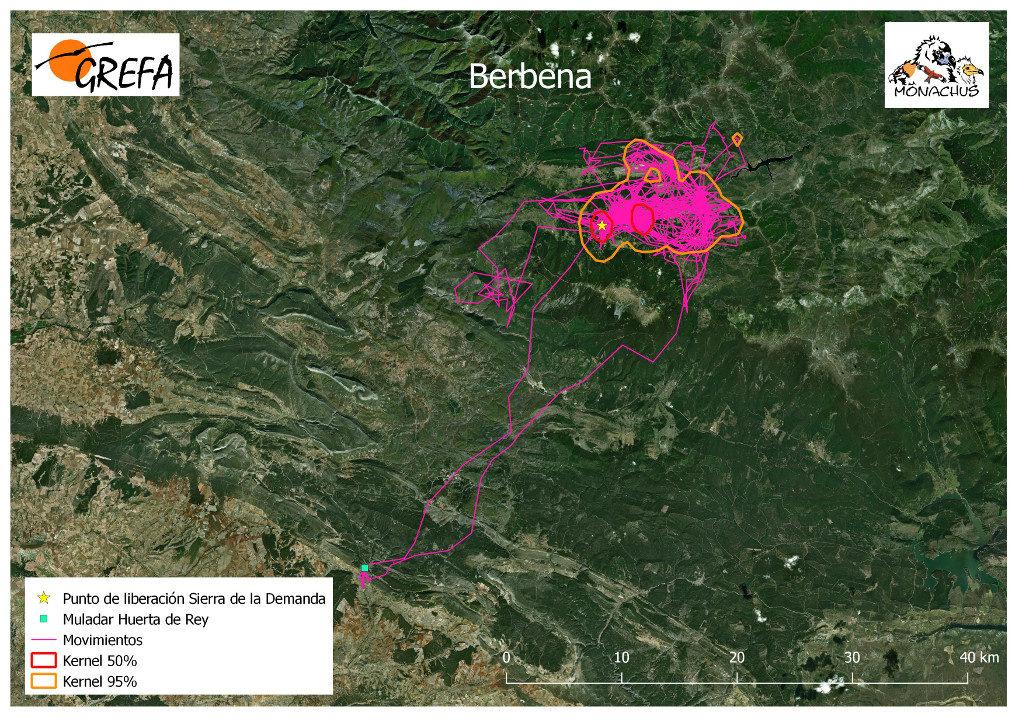 Mapa 7. Movimientos de Berbena durante los meses de noviembre y diciembre. La línea amarilla delimita el área de campeo (Kernel 95%) y la roja el área vital (Kernel 50%).