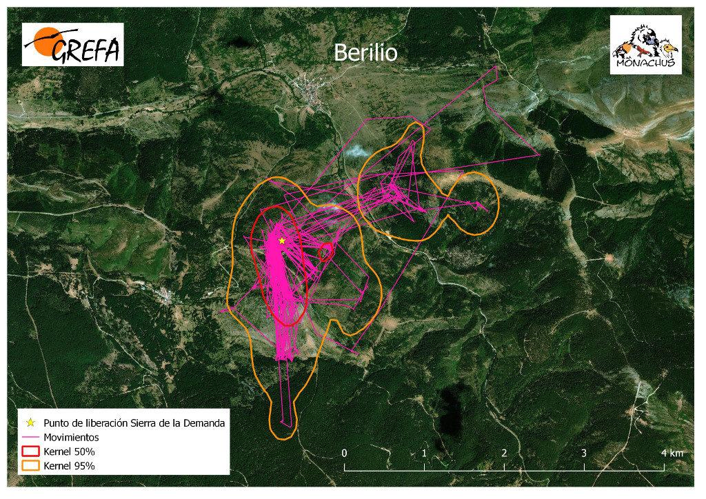 Mapa 9. Movimientos de Berilio durante los meses de noviembre y diciembre. La línea amarilla delimita el área de campeo (Kernel 95%) y la roja el área vital (Kernel 50%).