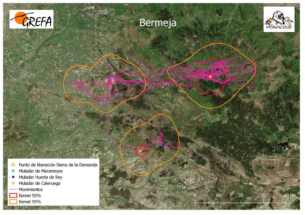 Mapa 10. Movimientos de Bermeja durante los meses de noviembre y diciembre. La línea amarilla delimita el área de campeo (Kernel 95%) y la roja el área vital (Kernel 50%).
