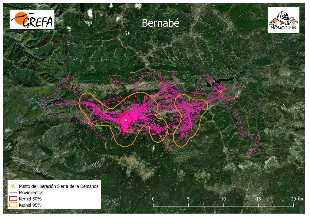 Mapa 11. Movimientos de Bernabé durante los meses de noviembre y diciembre. La línea amarilla delimita el área de campeo (Kernel 95%) y la roja el área vital (Kernel 50%).
