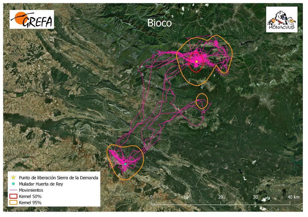 Mapa 12. Movimientos de Bioco durante los meses de noviembre y diciembre. La línea amarilla delimita el área de campeo (Kernel 95%) y la roja el área vital (Kernel 50%).