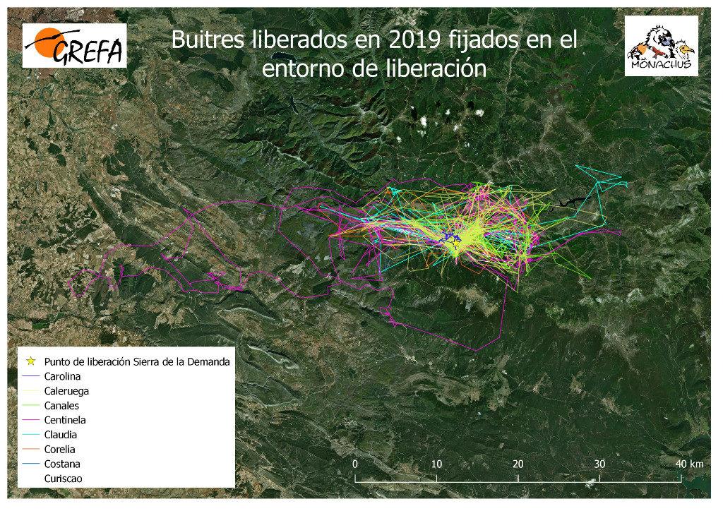 Mapa 13. Movimientos de los buitres liberados en 2019 que permanecieron en el entorno de liberación durante los meses de noviembre y diciembre.