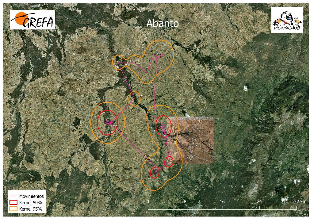Mapa 14. Movimientos de Abanto durante el mes de noviembre. La línea amarilla delimita el área de campeo (Kernel 95%) y la roja el área vital (Kernel 50%).