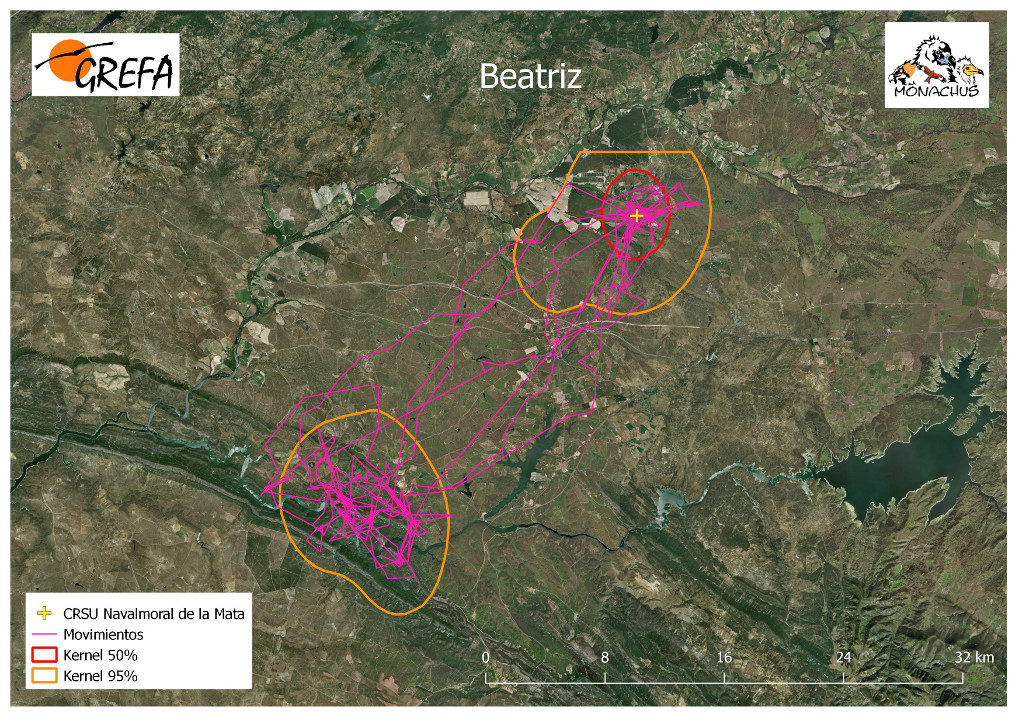 Mapa 15. Movimientos de Beatriz durante los meses de noviembre y diciembre. La línea amarilla delimita el área de campeo (Kernel 95%) y la roja el área vital (Kernel 50%).
