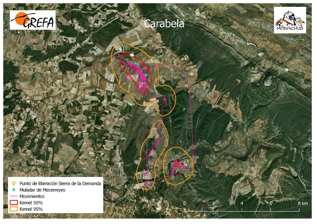 Mapa 18. Movimientos de Carabela durante el mes de noviembre. La línea amarilla delimita el área de campeo (Kernel 95%) y la roja el área vital (Kernel 50%).