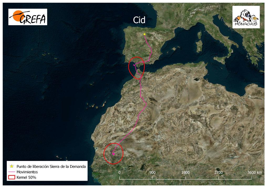 Mapa 20. Movimientos de Cid durante los meses de noviembre y diciembre. La línea roja delimita el área vital (Kernel 50%).