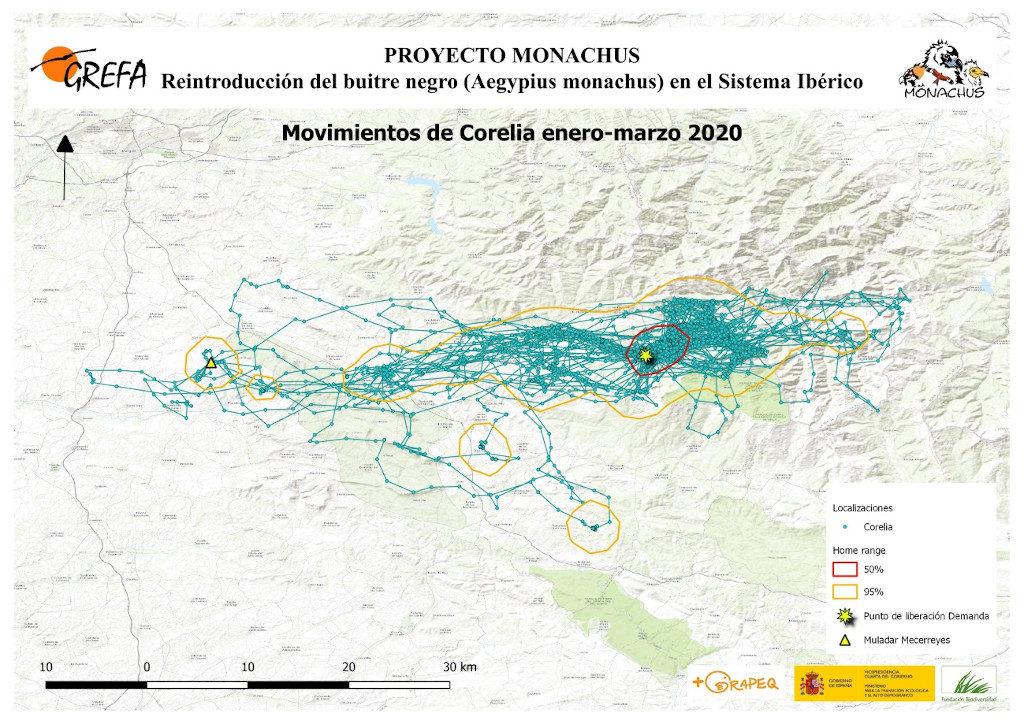Mapa 13. Movimientos de Corelia durante los meses de enero-marzo.