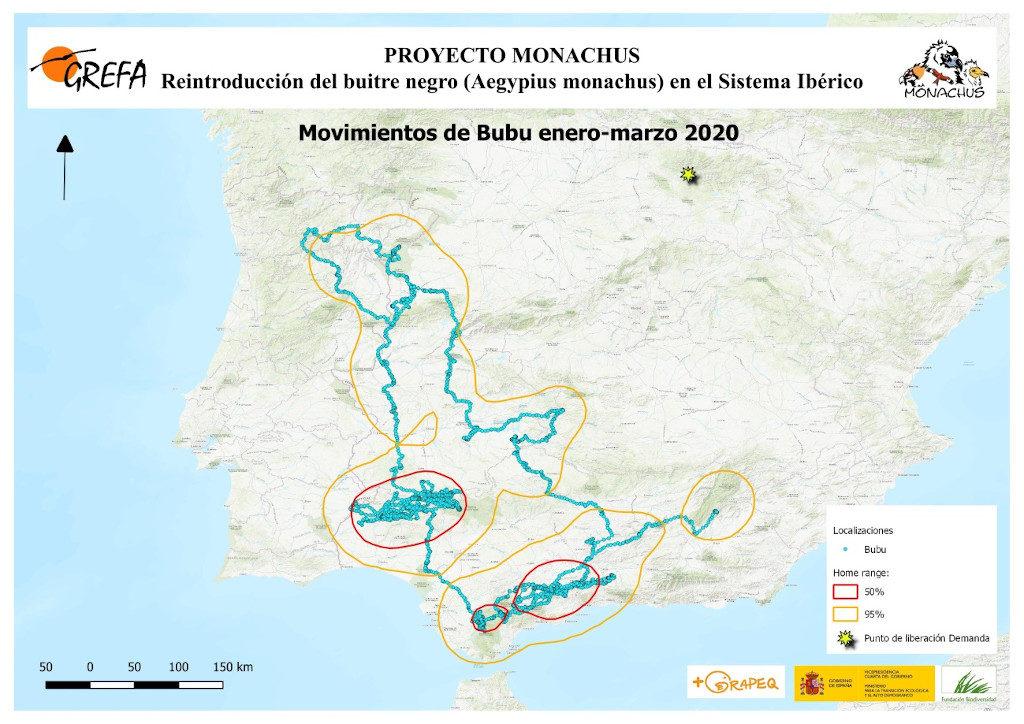 Mapa 21. Movimientos de Bubu durante los meses de enero-marzo.