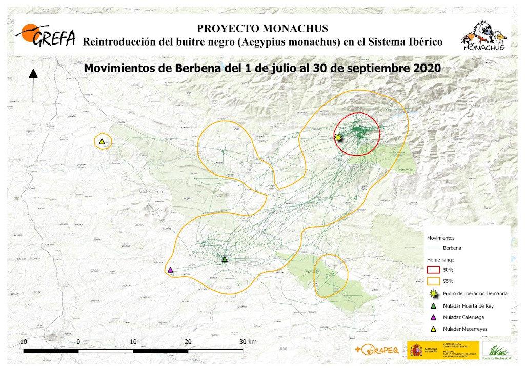 Mapa 4. Movimientos de Berbena durante julio-septiembre.