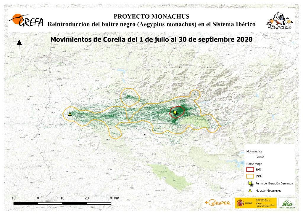 Mapa 8: Movimientos de Corelia durante los meses de julio-septiembre.