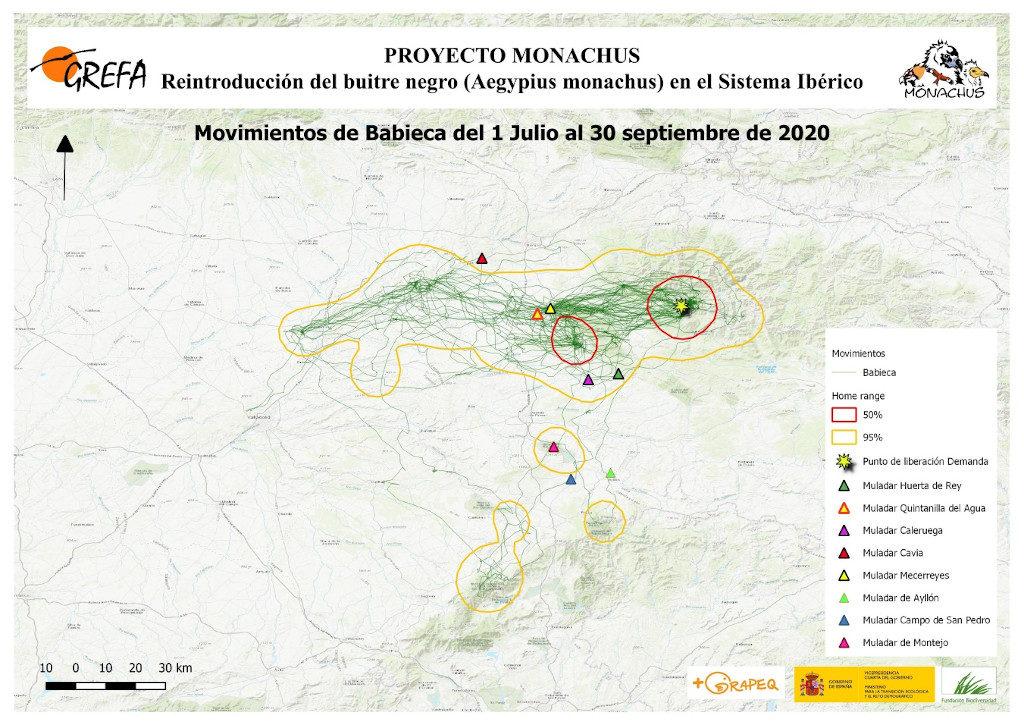 Mapa 15. Movimientos de Babieca durante los meses de julio-septiembre.